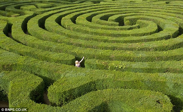 Photo of person in hedgerow maze to illustrate .. human History and society have survived and grown .. much more by processes of 'muddling through' than by conscious plans ...""